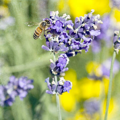 Photograph - Last Of The Lavender by Rebecca Cozart