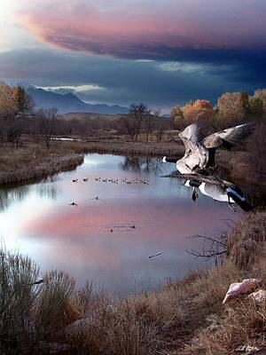 Canadian Geese Digital Art - Last Rays Of The Sun by Bill Stephens