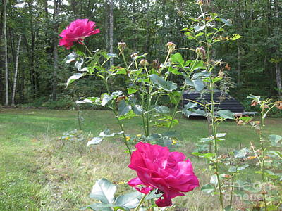 Painting - Last Roses Of The Summer For Mother  by Stella Sherman