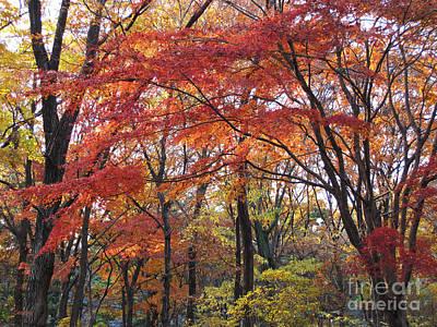 Photograph - Late Autumn by Eena Bo
