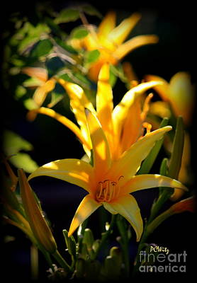 Photograph - Late-day-lily by Patrick Witz