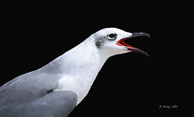 Photograph - Laughing Gull Ha Ha Ha Ha by Roena King