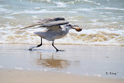 Photograph - Laughing Gull With Food by Roena King