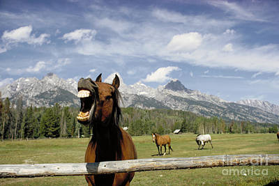 Laughing Horse Art Print by Porterfld and Chickerng and Photo Researchers