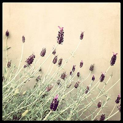 Lavender Photograph - Lavande by Lana Rushing