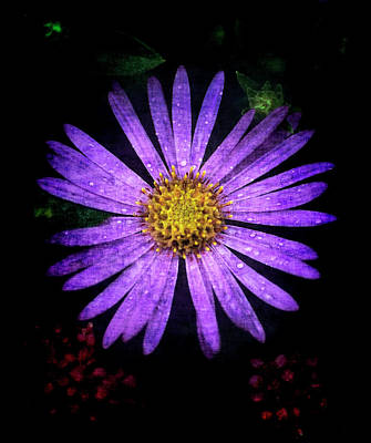 Photograph - Lavender Aster Flower by John Brink