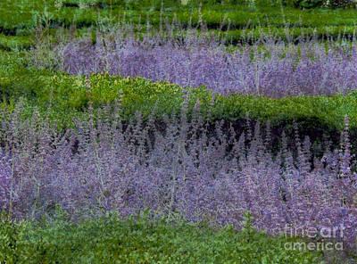 Photograph - Lavender by Bob Senesac