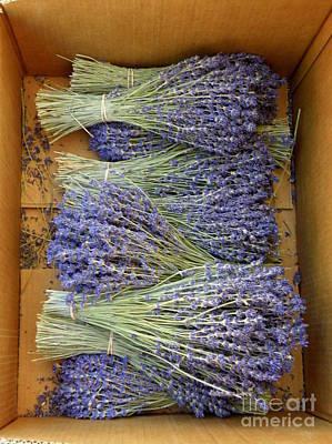 Art Print featuring the photograph Lavender Bundles by Lainie Wrightson