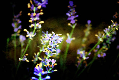 Photograph - Lavender Dream by Ellen Heaverlo