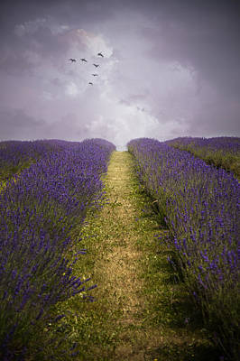 Photograph - Lavender Field by Ethiriel  Photography