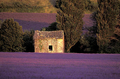 Lavender Fields Art Print by Christian Heeb