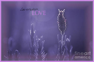 Photograph - Lavender Love by Vicki Ferrari