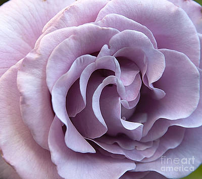 Photograph - Lavender Rose by Jeannette Hunt