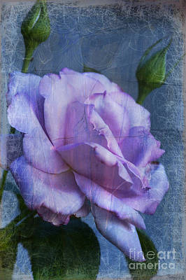 Photograph - Lavender Rose by Jim And Emily Bush