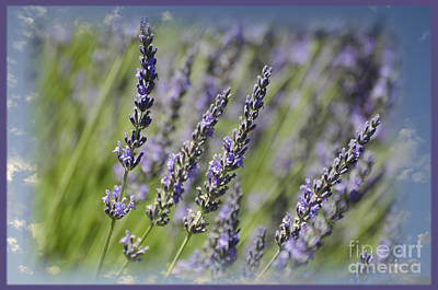 Photograph - Lavender Sky by Jim And Emily Bush