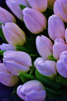 Amature Photograph - Lavender Tulips by Bruce Bley
