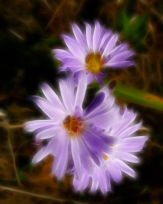 Photograph - Lavender Wild Aster Flowers Abstract by Cindy Wright