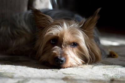 Photograph - Lazy Kind Of Day by Scott Hervieux