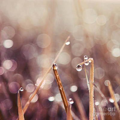 Rain Droplet Photograph - Le Reveil - S04d2 by Variance Collections
