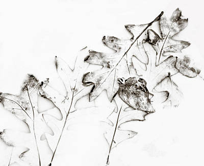 Photograph - Leaf Abstraction by Marilyn Hunt