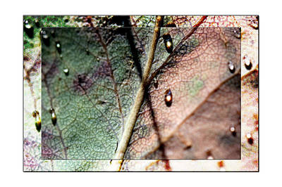 Raindrop Photograph - Leaf After Rain by Marie Jamieson