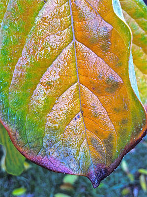 Leaf Art Print by Bill Owen