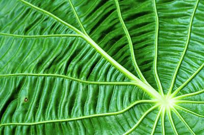 Leaf Art Print by by Jonathan Fife