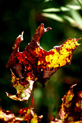 Decay Photograph - Leaf Decay by LeeAnn McLaneGoetz McLaneGoetzStudioLLCcom