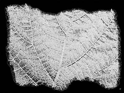 Digital Art - Leaf Design- Black And White by Will Borden