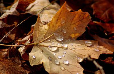 Leaf Doplets Art Print by LeeAnn McLaneGoetz McLaneGoetzStudioLLCcom