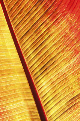 Photograph - Leaf by Ian Merton