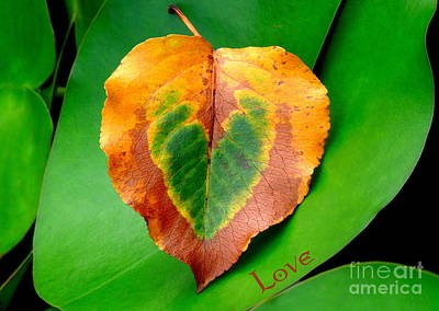 Photograph - Leaf Leaf Heart Love by Renee Trenholm