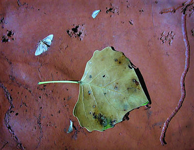 Photograph - Leaf Libretto by Britt Runyon