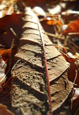 Photograph - Leaf Litter by Michael Standen Smith