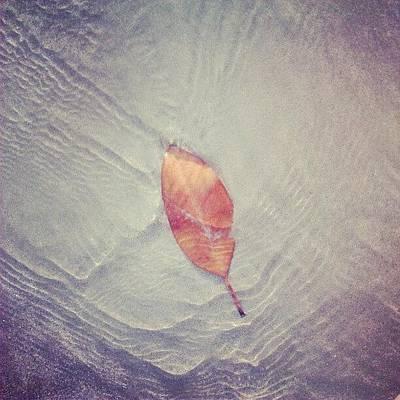 Wallpaper Wall Art - Photograph - Leaf by Nawarat Namphon