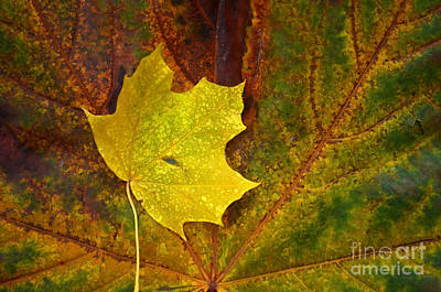 Photograph - Leaf On A Leaf by Tara Turner