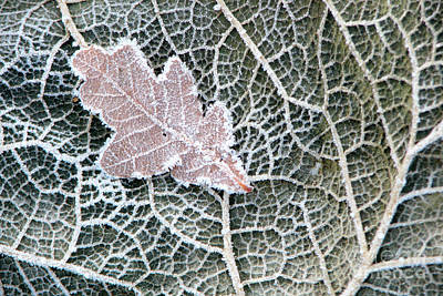 Photograph - Leaf On Leaf by Frank Townsley