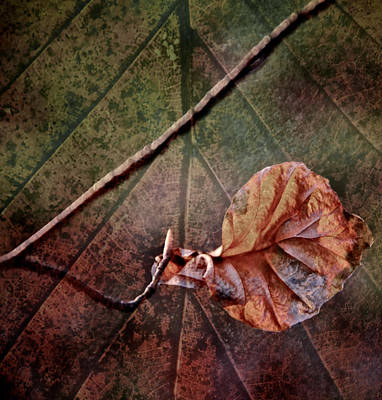 Leaf On Leaf Art Print by Odd Jeppesen