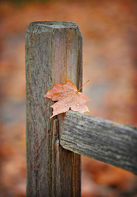 Split Rail Fence Photograph - Leaf On The Fence by Brian Mollenkopf