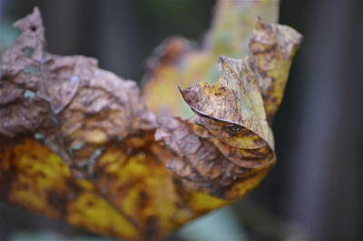 Photograph - Leaf by Paige Hval