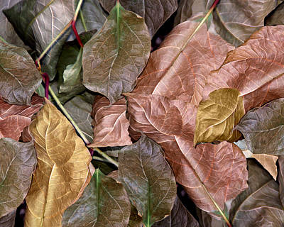 Photograph - Leaf Pattern by Lynda Lehmann