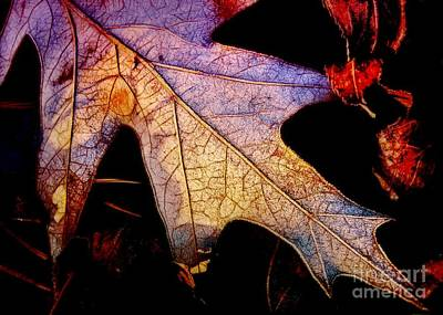 Photograph - Leaf With Frost by Judi Bagwell
