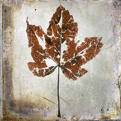 Leaf  With Textured Effect Art Print by Bernard Jaubert