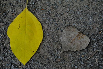 Leaf Yellow And Grey Art Print
