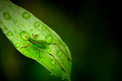 Photograph - Leafhopper 2 by David Weeks