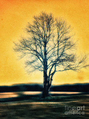 Photograph - Leafless Tree by Jutta Maria Pusl