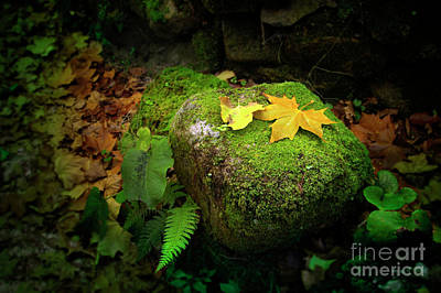 Element Photograph - Leafs On Rock by Carlos Caetano