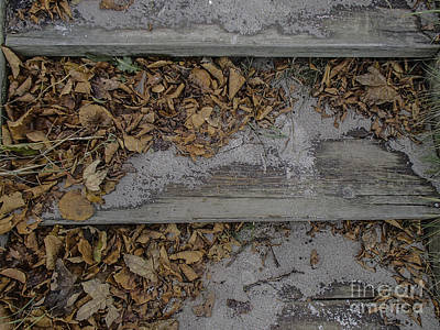 Photograph - Leafy Steps At Ystad by Michael Canning