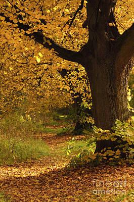 Buche Photograph - Leafy Trail by Katja Zuske