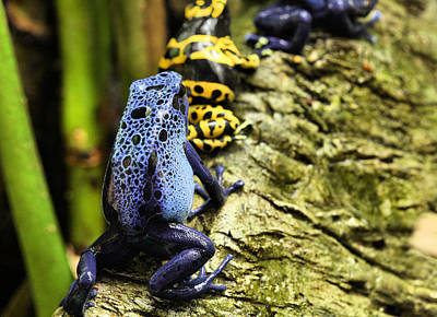 Leap Frog Photograph - Leap Frog by JC Findley